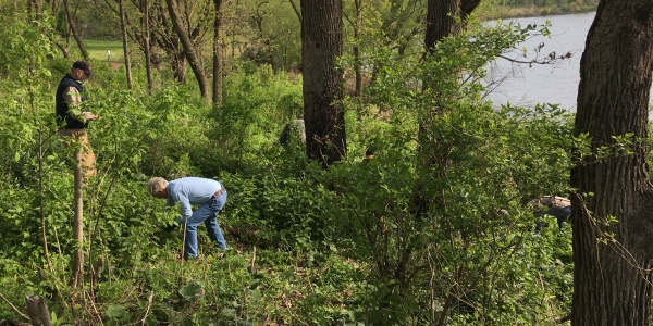 Volunteers doing invasive species removal at Lakeside Lab